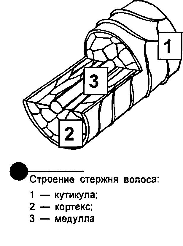 https://klow.ru/images/24112009-5.png